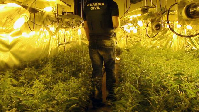 Un agente recorre una de las plantaciones de marihuana