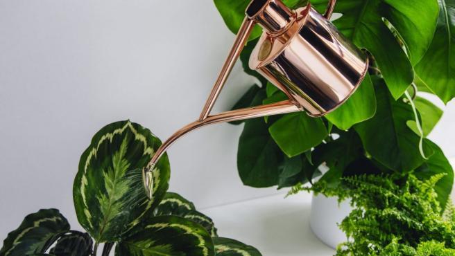 Planthae vende platas y macetas y es una asesoría botánica
