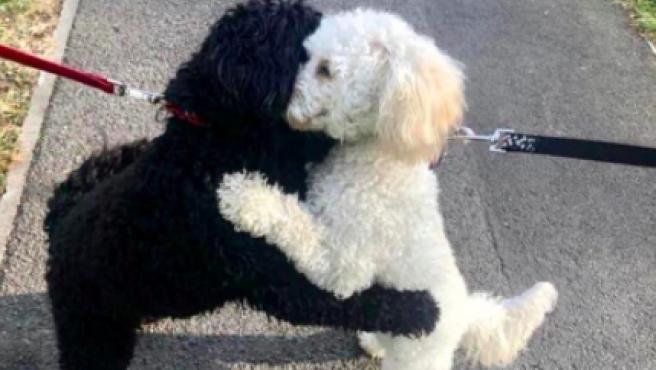 Dos perros hermanos abrazándose tras su reencuentro.