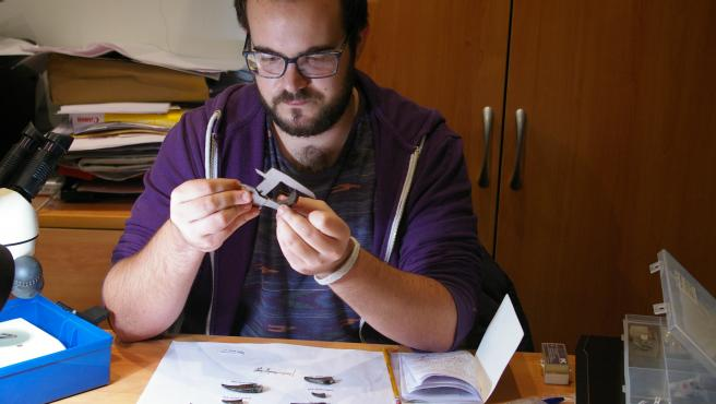 Álvaro Simarro Estudiando Los Dientes De Dinosaurios.
