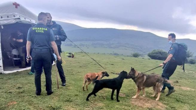 Perros especializados en el dispositivo de búsqueda del joven desaparecido en Campoo