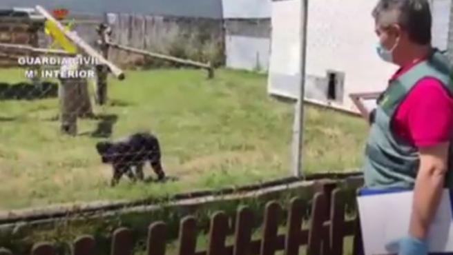 Uno de los monos abandonados en una parada de autobús.