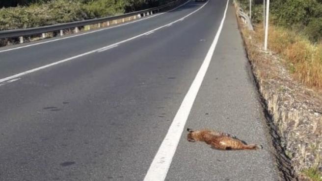 Muere una hembra de lince en las carreteras del entorno de Doñana.