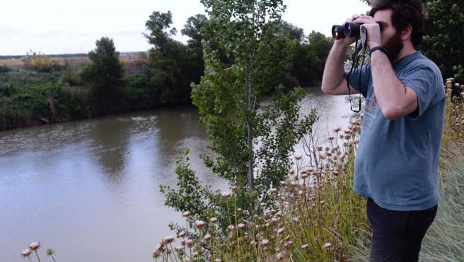 """Continúa la búsqueda del cocodrilo del Nilo cuya presencia fue advertida el pasado viernes por un biólogo en la ribera de la confluencia de los ríos Duero y Pisuerga, en la zona de Pesqueruela (Valladolid). Aunque no está confirmado que se trate de un cocodrilo del Nilo, las autoridades buscan con precaución a este espécimen por ser considerado peligroso, pero también asustadizo, según informa la Subdelegación del Gobierno. """"Peligro por la existencia de un cocodrilo en la ribera del río Duero"""" se puede leer en el bando del alcalde de la entidad local menor de Villamarciel, Francisco Luengo. Avisa además el bando de que el animal, que puede haberse escapado de alguna vivienda cercana al río donde lo tuvieran como mascota, """"podría resultar muy peligroso"""" para las personas, por lo que se ruega a la población que, hasta su captura, extreme la precaución y no se acerquen al río, especialmente pescadores y piragüistas. ¿Qué se sabe del animal hasta ahora?"""