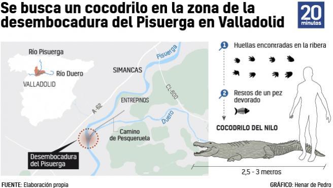 Búsqueda de un cocodrilo en Valladolid