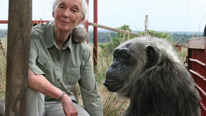 Jane Goodall with rescued chimpanzee LaVielle at the Tchimpounga Chimpanzee Rehabilitation Center in the Republic of the Congo.