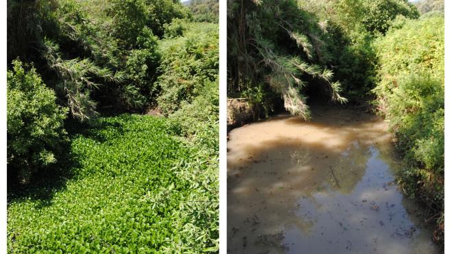 Controlada una invasión de jacinto de agua en la frontera entre Algeciras y Los Barrios