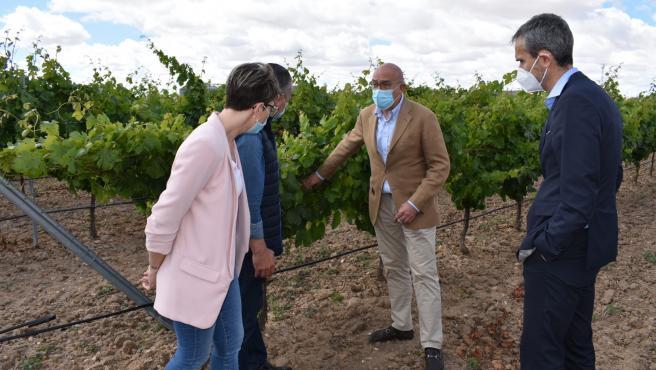 Carnero visita un viñedo de la DO Rueda en Nava del Rey