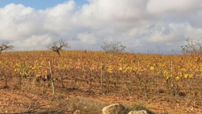 Medio Ambiente propone incrementar en un 59 por ciento las Zonas vulnerables a la contaminación por nitratos de origen agrario.