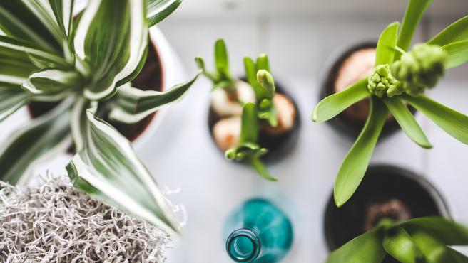 Plantas de interior.