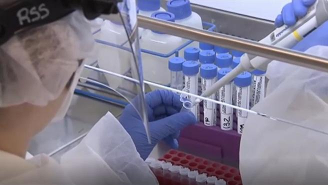 Un científico analiza unas muestras de coronavirus.