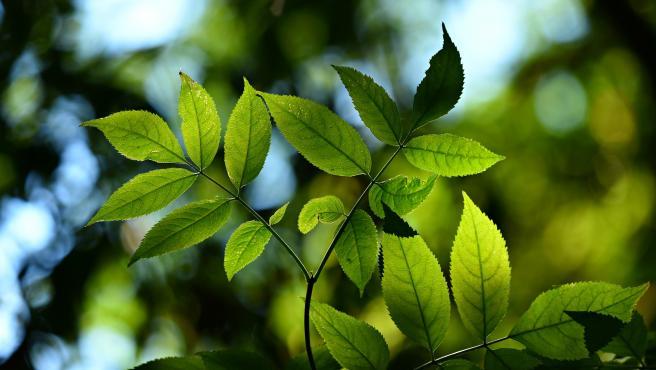 Imagen de archivo de una rama con hojas verdes.