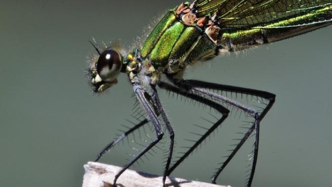 Una imagen de la muestra 'Insectos. Tesoros diminutos'.