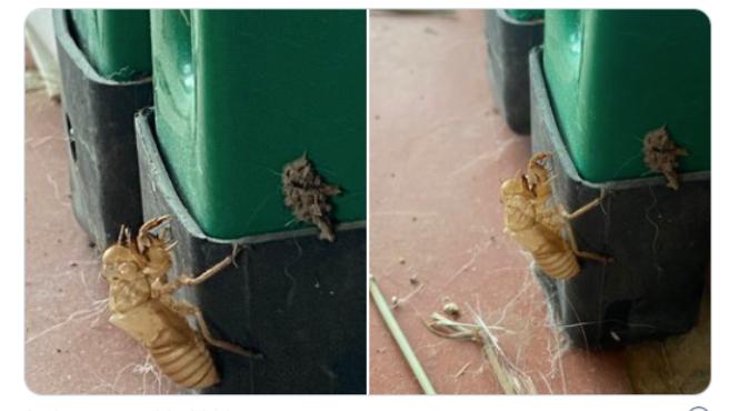 Una tuitera se encontró la muda de un insecto en su terraza.