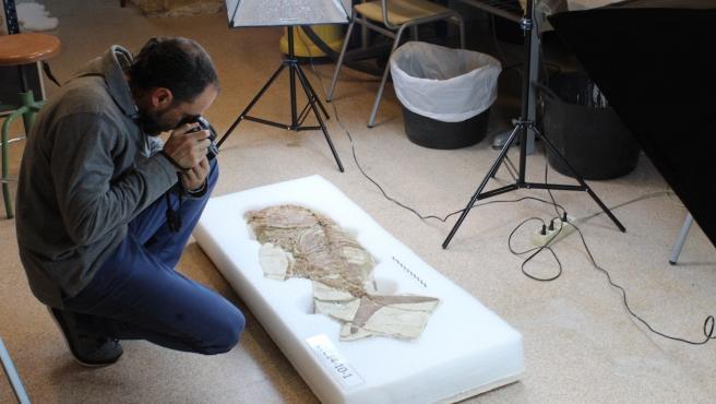 Fosil fotografiado