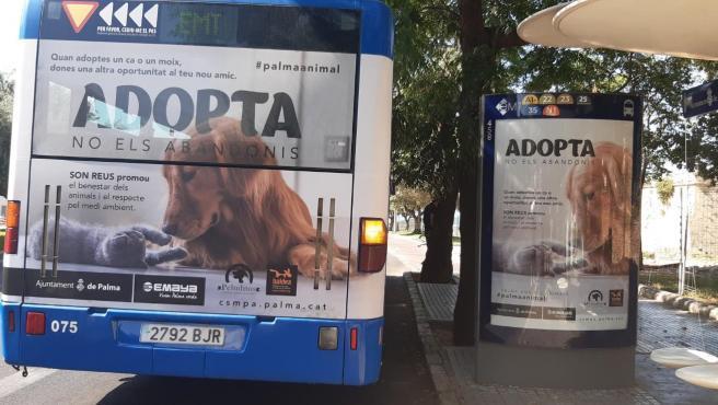 Presentación de la camapña 'Adopta, no los abandones'.