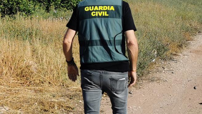 Un agente de la Guardia Civil recorre los campos de cítricos sustraídos
