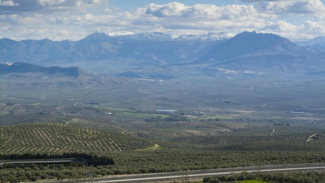 UPA valora que Planas acepte su propuesta de no almacenar aceite de oliva no español
