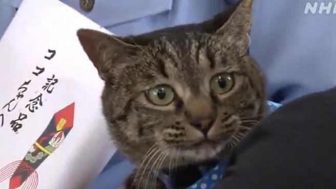 Coco, el gato que recibió el reconocimiento y el diploma de la policía japonesa.