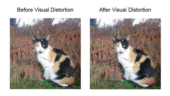 Imagen original e imagen distorsionada