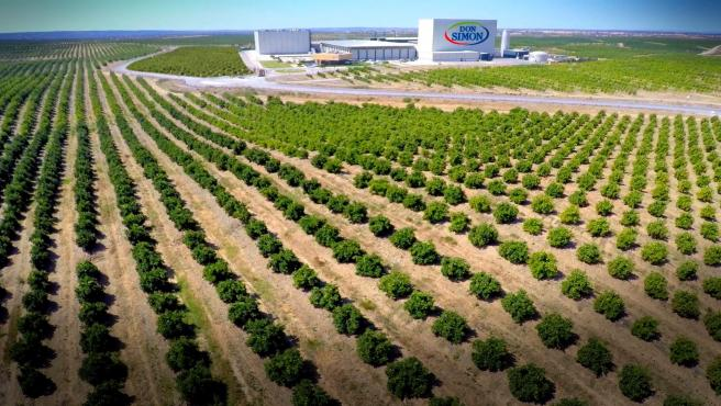 Planta de García Carrión