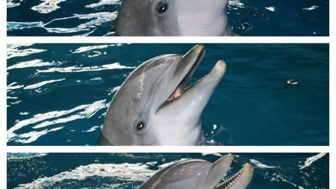 Los tres últimos delfines del Zoo de Barcelona ya se han trasladado a Atenas (Grecia) Los tres últimos delfines del Zoo de Barcelona ya se han trasladado a Atenas (Grecia) 19/7/2020