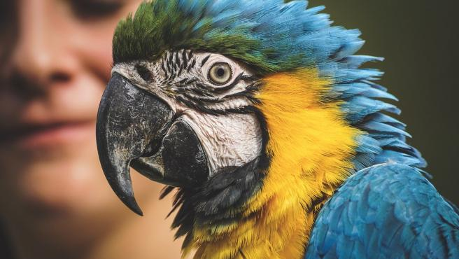 Un loro con su característico y colorido plumaje.