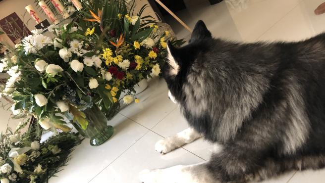 Un perro que no se separa de las cenizas de su dueño fallecido