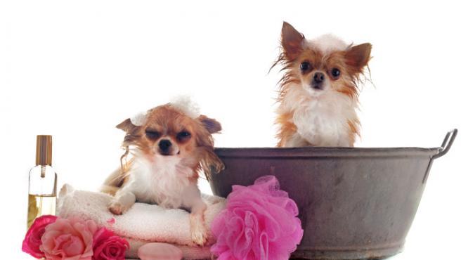 Imagen de recurso de dos perros junto a útiles de baño.