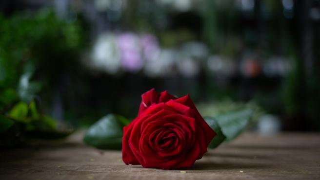 Rosa por Sant Jordi