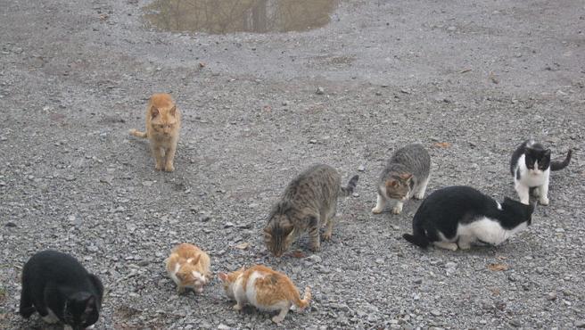 Imagen de un grupo de gatos callejeros.