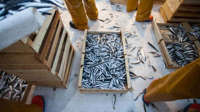 Parte del género recogido tras un día de pesca en Barcelona.