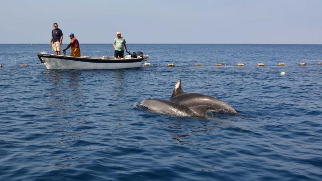 Liberados dos delfines mulares de la almadraba de La Azohía, Cartagena