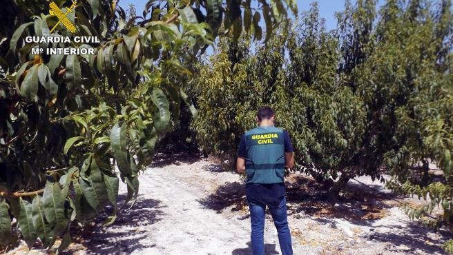 La Guardia Civil esclarece una decena de estafas a agricultores de la Vega Alta del Segura