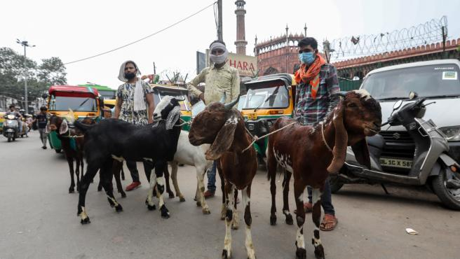 New Delhi (India), 25/07/2020.- Vendors stand near goats displayed for sale on a street ahead of the Eid al-Adha celebrations near the Jama Mosque in the Old Quarters of Delhi, India, 25 July 2020. Eid al-Adha is the holiest of the two Muslims holidays celebrated each year, it marks the yearly Muslim pilgrimage (Hajj) to visit Mecca, the holiest place in Islam. Muslims slaughter a sacrificial animal and split the meat into three parts, one for the family, one for friends and relatives, and one for the poor and needy. (La meca, Nueva Delhi) EFE/EPA/RAJAT GUPTA