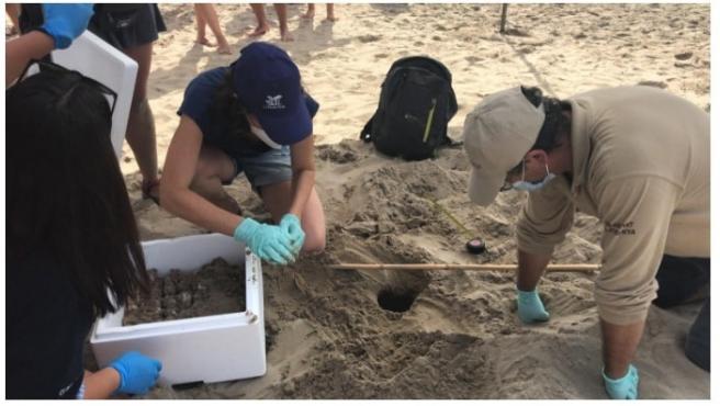 Personal técnico de la Generalitat junto a los nidos de tortuga boba hallados este julio en la playa de Vila-seca (Tarragona)