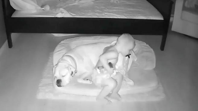 Pillan a un niño saliendo de la cama para dormir con su perro.