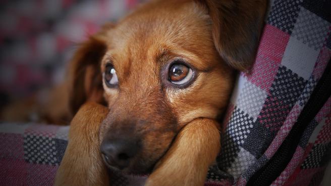 Un lindo cachorro.