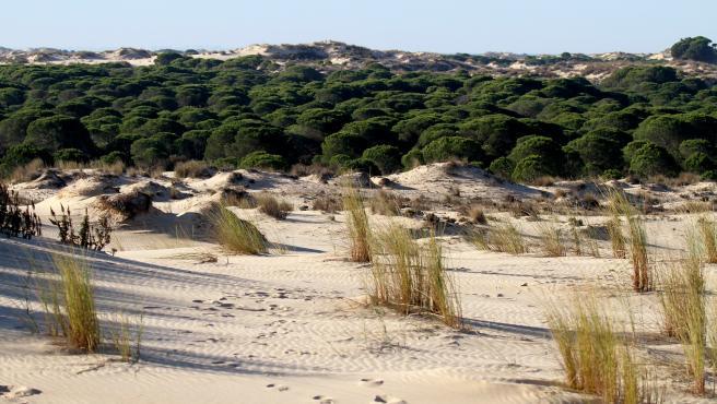 Otro de los grandes símbolos paisajísticos de España. Doñana es una mezcla de ecosistemas, con dunas, bosques, marismas y llanuras. Es el hogar de algunas especies animales como el lince ibérico o el águila imperial.