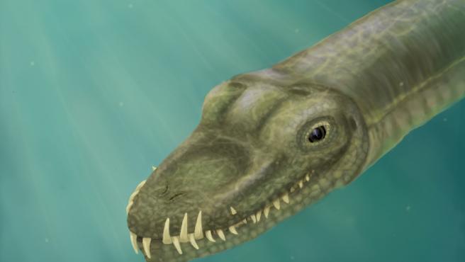 Ilustración de 'Tanystropheus' que, con unas fosas nasales ubicadas en la parte superior del hocico y dientes curvos, estaba perfectamente adaptado para atrapar presas resbaladizas en el agua.