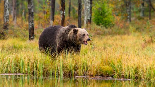 Imagen de un oso.