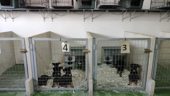 Animales en el centro de Sadeco.