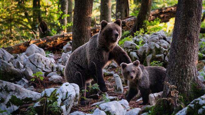Imagen ilustrativa de dos osos.