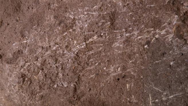 Fragmentos de hierba fosilizada que datan de 200.000 años.