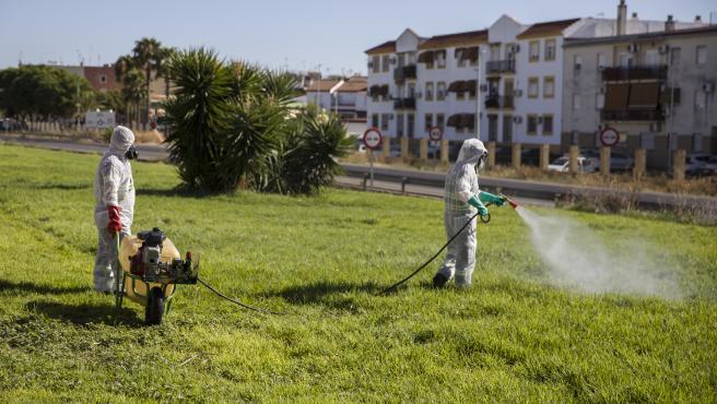 Dos trabajadores durante las labores de fumigación contra los mosquitos causantes del virus del Nilo en Coria del Río.