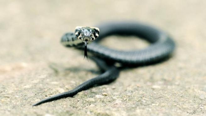 Imagen de una serpiente.