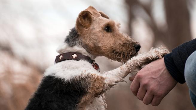 Un perro coloca su pata sobre la mano de su dueño.