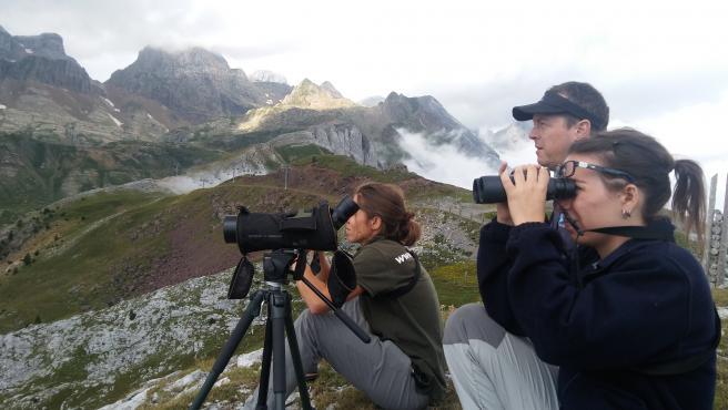 Observación de las aves en el Pirineo.