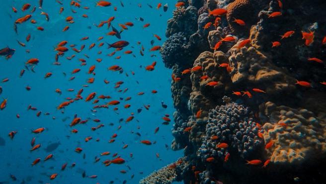 Los peces en los océanos se estresan por el aumento de CO2