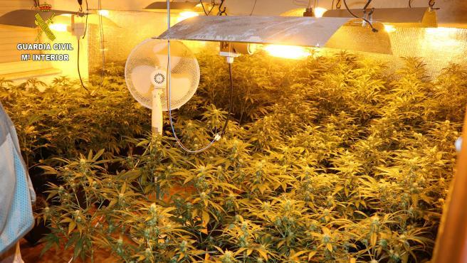 Plantación 'indoor' de marihuana desmantelada por la Guardia Civil (imagen de archivo)